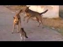 Сумасшедший Кот атакует собаку очень злой Кот !!!