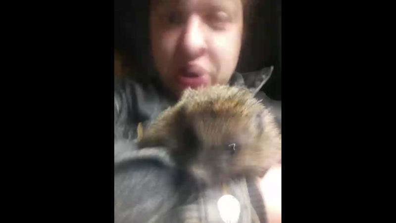 Михаил Воротынский - Live