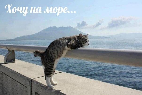 Фото №456245232 со страницы Сергея Кондрашова