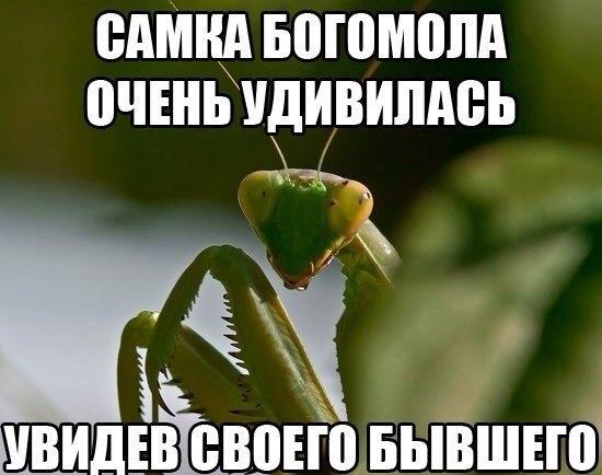 Фото №456245329 со страницы Сергея Кондрашова