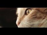 Francesco Rossi - Paper Aeroplane ( Artur Montecci Remix )