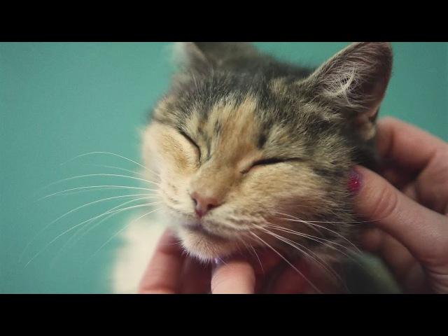 Томская зоозащитная организация СОДРУЖЕСТВО - Кошки. У каждого должен быть дом