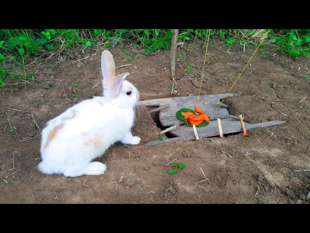 Ловушка для зайца