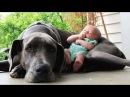 Собака — лучший друг человека!