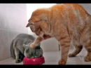 Lustige Katzen Videos Zum Totlachen 10 min - 2016