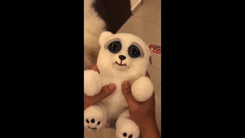Cute VS Scary