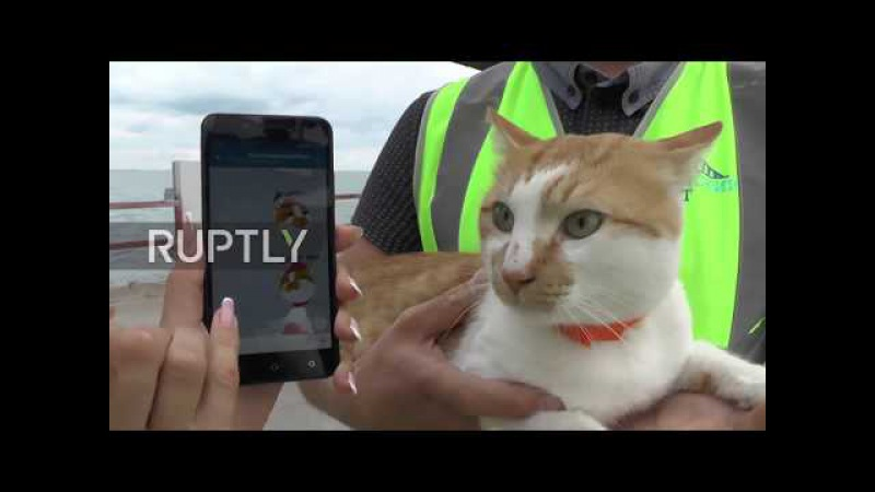 Pawsome Mostik the cat becomes unofficial construction foreman at Crimean Bridge