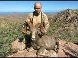 БАРАНТОЛСТОРОГ ПУСТЫННЫЙ Охота в горах Мексики