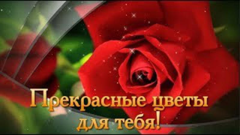 Цветы для Тебя🌷Красивые Цветы с Пожеланиями🌷Подарить Букет Цветов