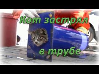 Спецоперация по спасению кота, застрявшего в трубе ┃ Rescue cat