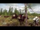 Фильм Хлебное дерево Сибири