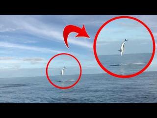 «Боже, я снимаю это на видео»: реакция рыбаков на прыгающую акулу на юго-западе Ф ...