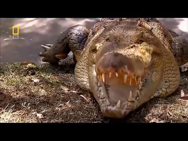 Дикая природа Австралии. Самые опасные животные Австралии