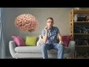 Эволюция головного мозга человека Функции мозга на каждом этапе его развития Часть 1 ' ujkjdyjuj vjpuf xtkjdtrf aeyrw