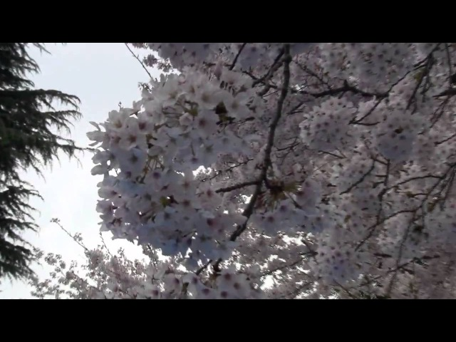 Japan 2011 Shy like an angel Maxim Novitskiy feat Dj Amure