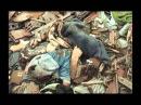 Bombardovanje Srbije 1999. godine - izuzetno potresne slike