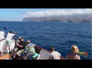 Whale watching La Gomera The summer of the Brydes Whale