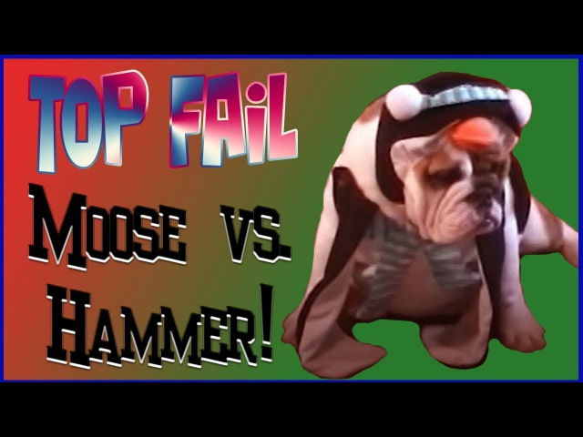 TOP FAiL: Moose vs. Hammer! Декабрь 2017