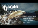 Кумжа. Охота на рыбалку с Вилле Хаапасало 🌏 Моя Планета
