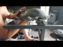 PRE Tuning assault session ring before tuning details in ring C-AMARA db Handpan