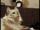 Киса, укусим ус! - видео для тех, кто помнит мою кошку 1992-2012 гг. Инта-Новополоцк.