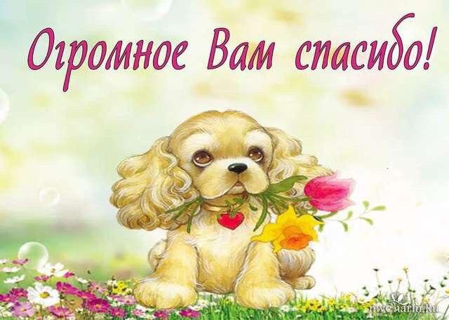 Картинки прикол, открытки спасибо с животными