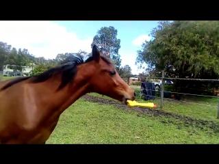 Лошадь и резиновая курица