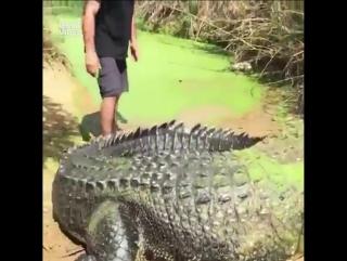 Обычное домашнее животное в Австралии