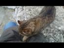 Кот мурлычет как леопард Симеиз Крым