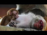 Monkey Temple - Swayambhunath in 4K!