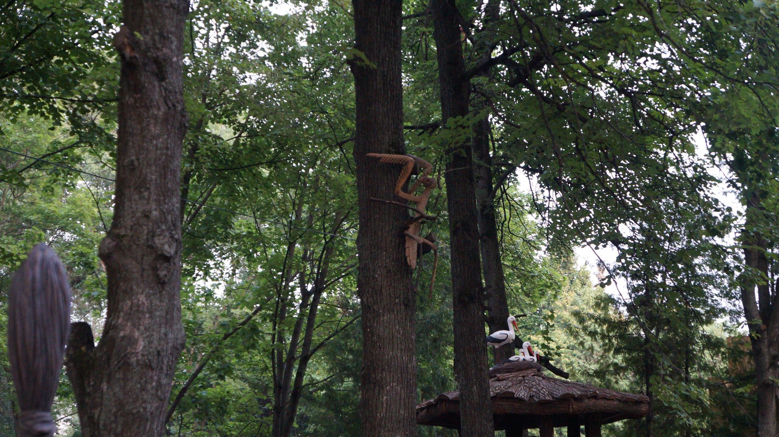 Завез бабу в лес фото 65-830