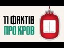 11 цікавих фактів про кров та групи крові людини