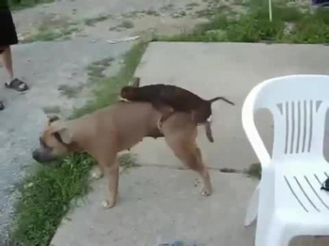 Funny dogsПокажи мне любовь))