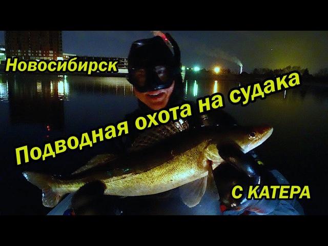 Подводная охота на судака, с катера в Новосибирске