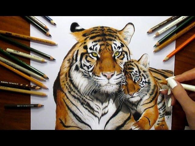 Colored Pencil Drawing: Tigress and Tiger Cub - Speed Draw   Jasmina Susak