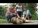 Жители Новомосковска против деятельности фирмы по отлову собак
