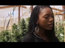 Hempress Sativa Twisted Sheets Official Music Video