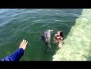 дельфины и люди.умные животные