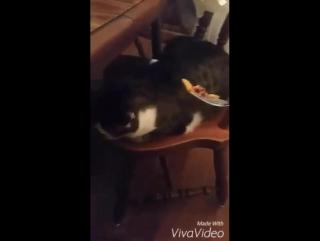 Коту не нравится, как готовит хозяин