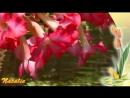 Вечность. Цветы в природе. Музыка для релаксации