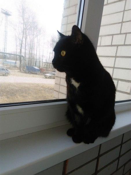 Ваш перепост может помочь вернуть кошку домой! Не могу поверить в то,