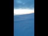 мохнатая зимняя шука