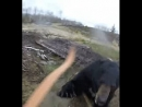 Жестокая атака медведя на человека