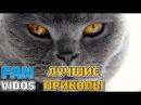 Смешные кошки и коты 2017.Приколы с котами и кошками для вашего настроения ! Смешны...