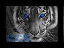 Eye Of The Tiger Remixed By Dj Star Nitou 2016