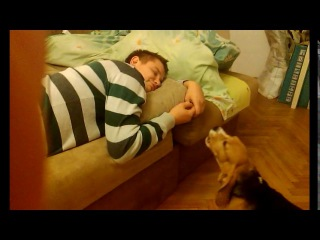 Бигль Бублик 3 месяца, думает что будит папу | Beagle of 3 months,thinking that wakes dad