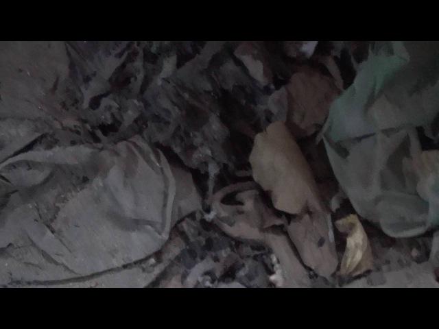 Подвал с собачьими костями в куче пепла