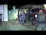 Dashcam Video Of K-9 Taking Down Man Pretending To Have Gun