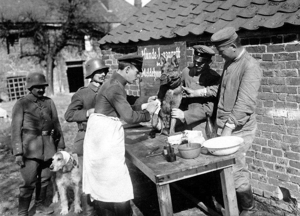 Германский госпиталь для служебных собак, пострадавших на фронте, 1918 год.