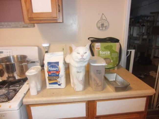 Фотографии прикольные смешные кошек. Бесподобие и грация.
